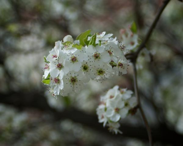 Spring Flowers speak of Hope, Joy, and Eternal Life