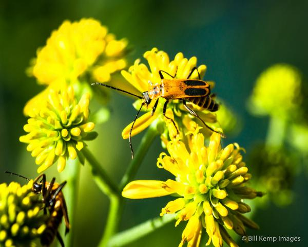 Flowers and insects are far more beautiful than they need to be