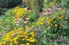 Flowers in Kemp Yard