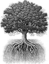 Branches are new, roots are old, the moderates keep them together