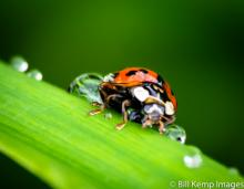 Lady bug after the rain